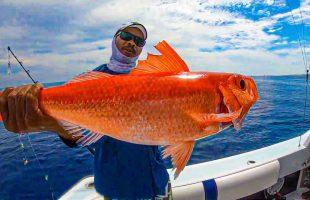 Deep Sea Fishing   Queen Snapper Catch N' Cook