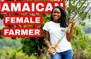 FARMING IN RURAL ST.CATHERINE JAMAICA