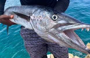 GIANT! Barracuda Catch Clean N' Cook
