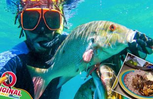 Spearfishing: Brown Stew Snapper Fish For Sunday Dinner   Catch And Cook Jamaican Style