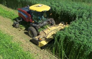 Hemp – The New Agricultural Frontier