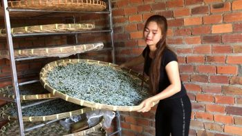 I am raising silkworms according to the traditional method