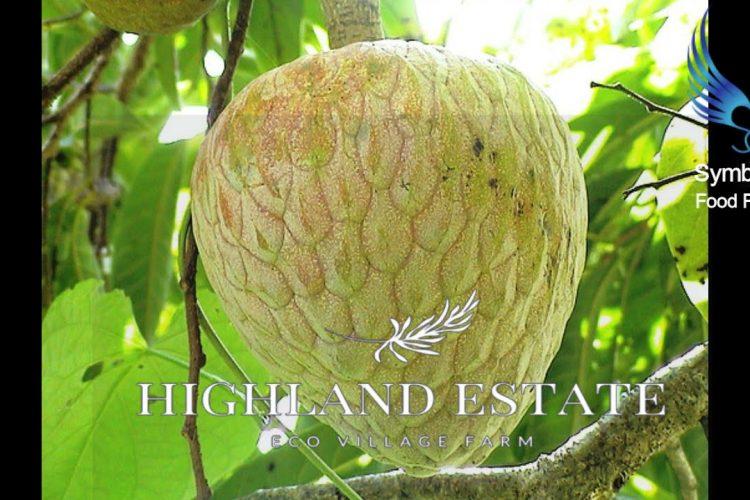 Highland Estate Jamaica