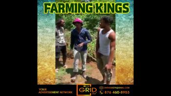 Must Watch! – Jamaican Farmers Making a big Song.