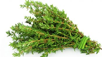 THE MOST POWERFUL HERB THAT DESTROYS STREP, HERPES, CANDIDA AND FLU VIRUSES