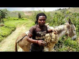 YOUNG YAM FARMER IN TRELAWNY JAMAICA| FARMING YAM FROM THE AGE OF 13 YRS OLD| FARMING YAM IN JAMAICA