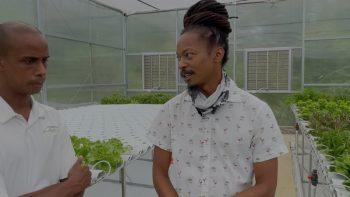 Hydroponic farming with Dwayne St Hill