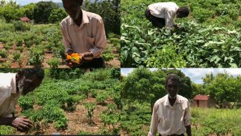 INSPIRATIONAL 81 YEAR OLD FARMER IN JAMAICA FARMING SCOTCH BONNET PEPPER TO CARE FOR HIS AILING WIFE