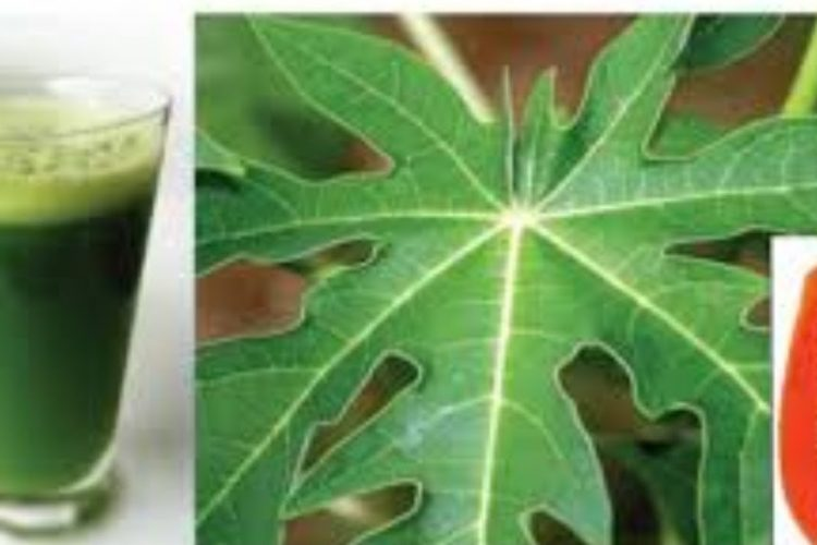 Drink Papaya Leaf Juice to Cure many Health problems   More To Life