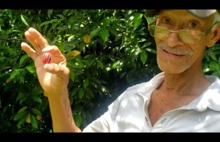 Meet The NUTMEG MAN   The Nutmeg Farm Tour   Amazing Health Benefits Of Jamaican Nutmegs